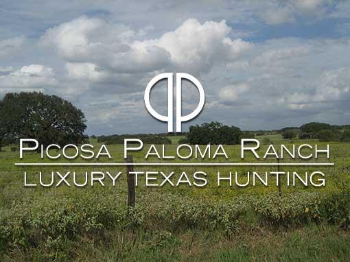 Picosa Paloma Ranch